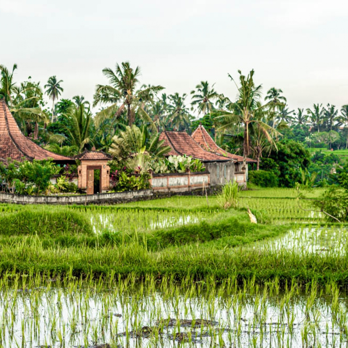 The Ultimate Bali Itinerary: 10 Days For All The Must-Visits