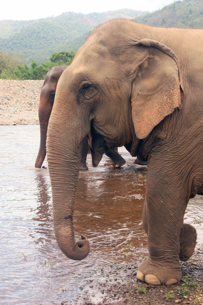 Elephant_nature_park_blogger_travelblog_Thailand_Chiang_mai_12