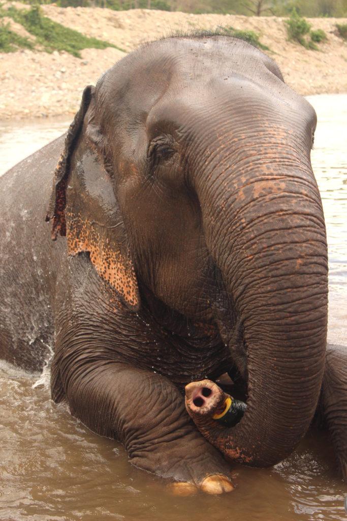 Elephant_nature_park_blogger_travelblog_Thailand_Chiang_mai_19
