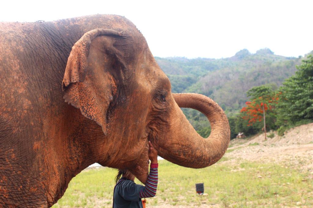 Elephant_nature_park_blogger_travelblog_Thailand_Chiang_mai_24