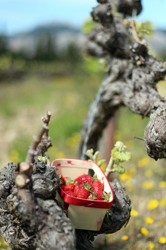 Wine_Rhone_valley_travel_blog_Avignon41