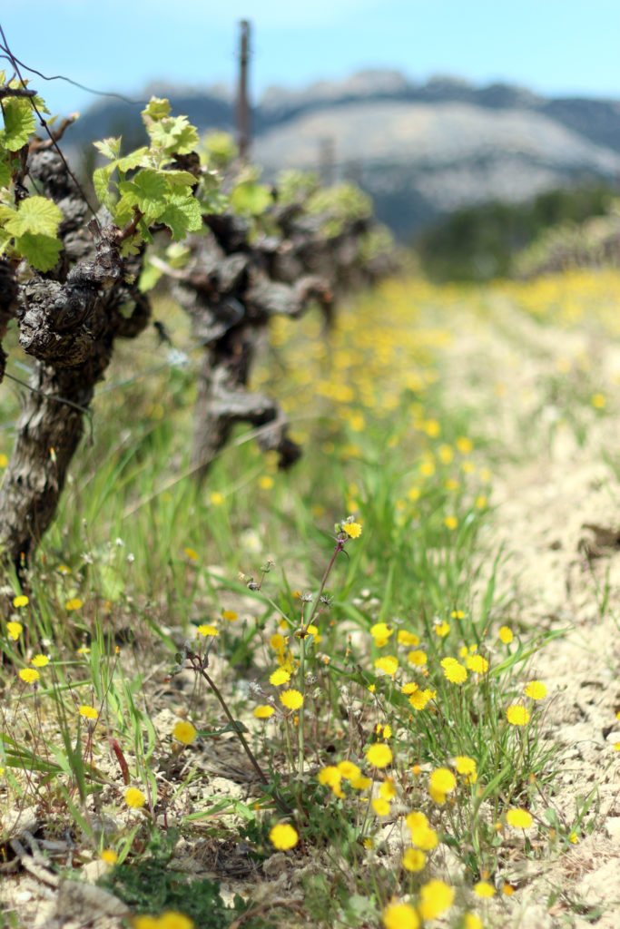 Wine_Rhone_valley_travel_blog_Avignon42