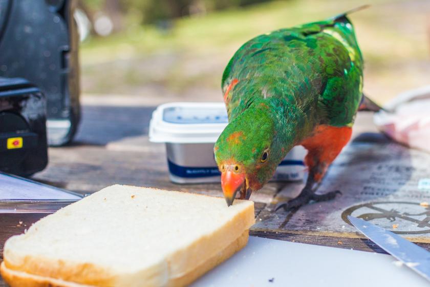 Jervis_bay_australia_new_south_wales_travel_rooftopantics (5 of 16)