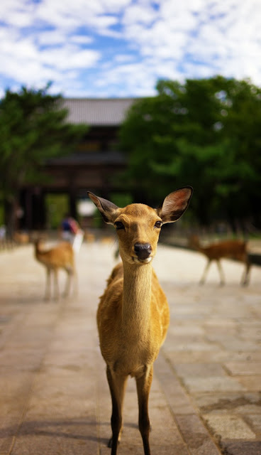 Japan_travelblog_traveltips_rooftopantics_Nara_