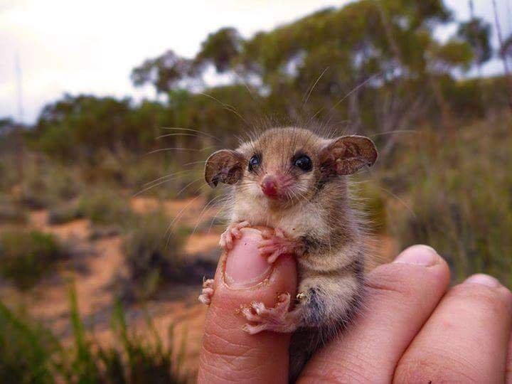 australia_wildlife_nt_cute