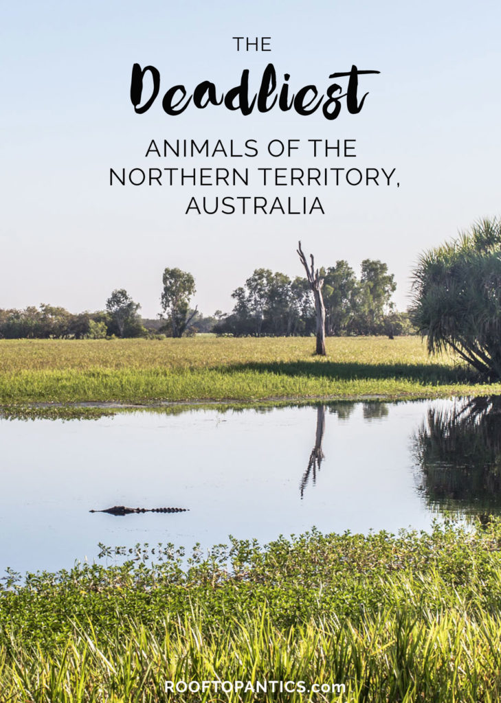 deadly_animals_northern_territory_australia_rooftopantics3