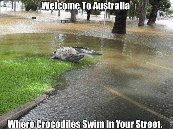 wildlife_australia_crocodiles
