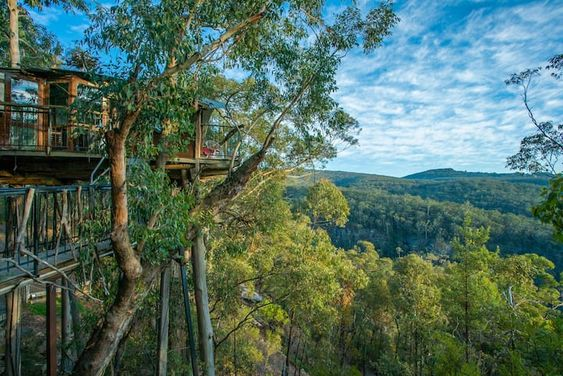 blue mountains treehouse accommodation NSW high in the treetops
