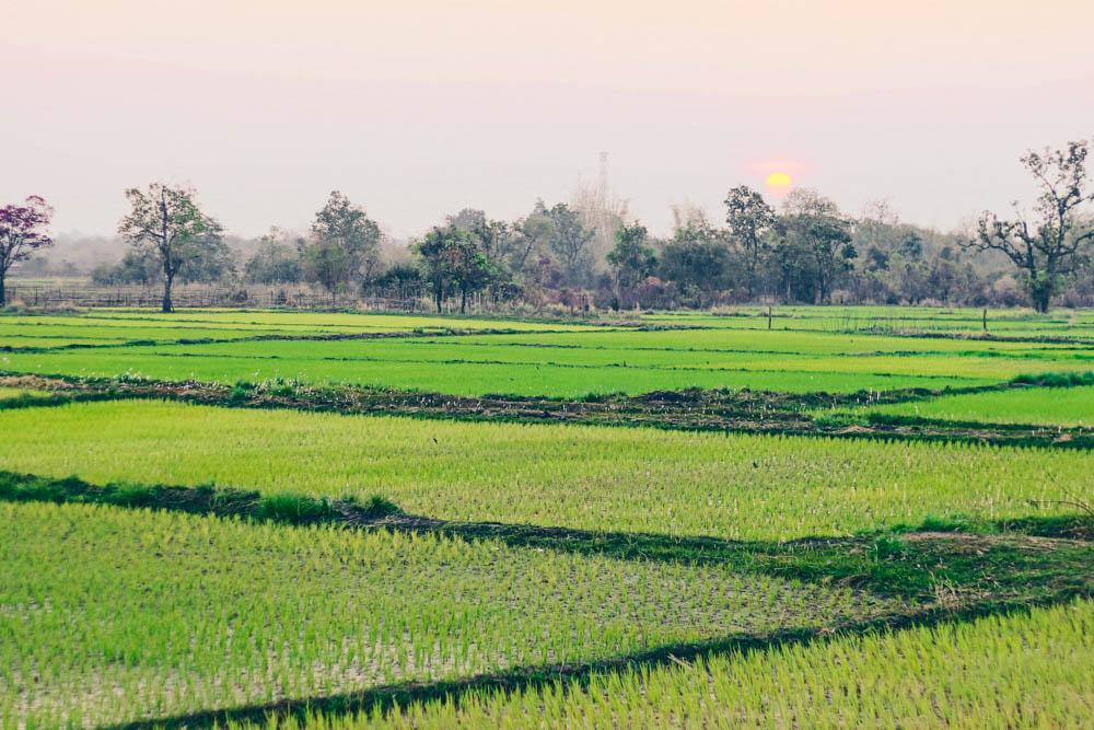 rice-paddies on the thakhek loop in Laos with motorcycle