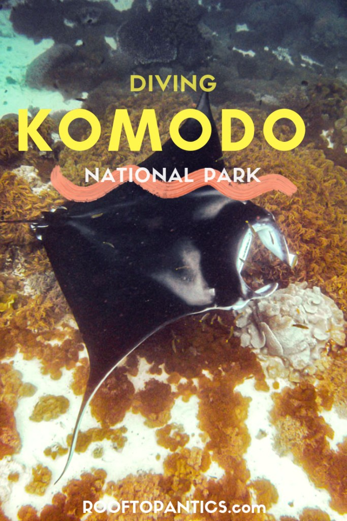 See Manta Rays and much more while Scuba Diving in Komodo National Park, Flores, Indonesia
