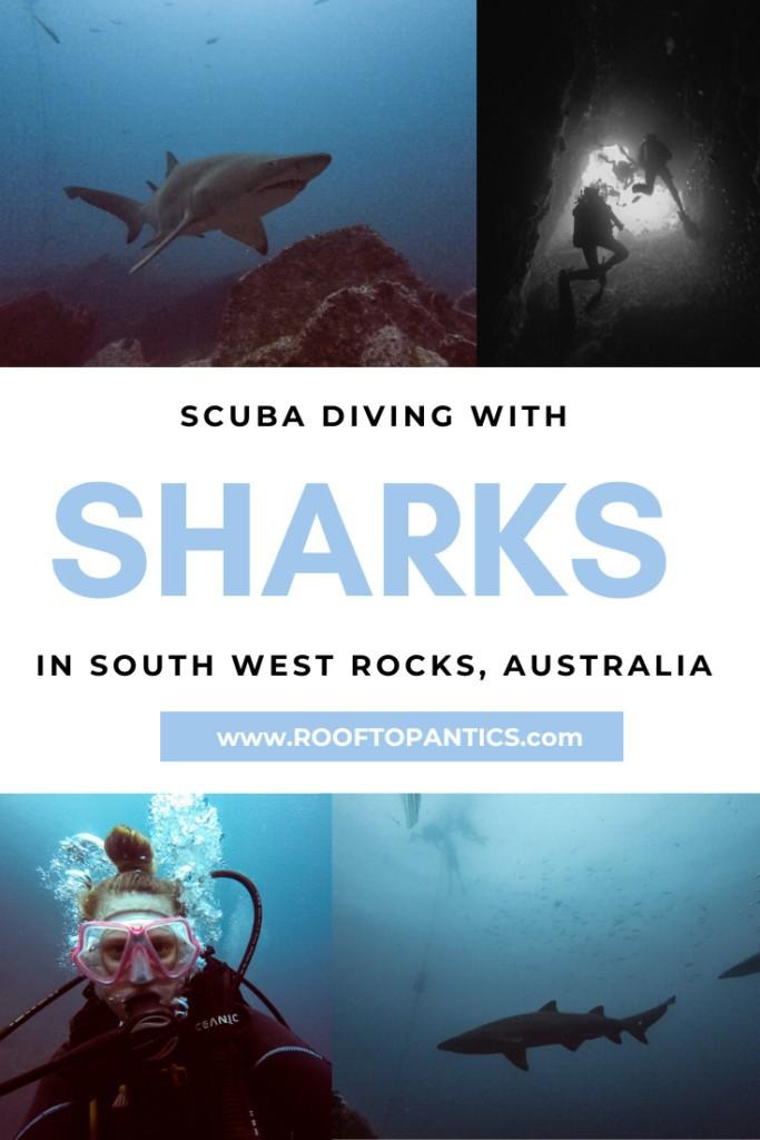 South West Rocks Dive: Scuba diving with grey nurse sharks in South West Rocks, Australia