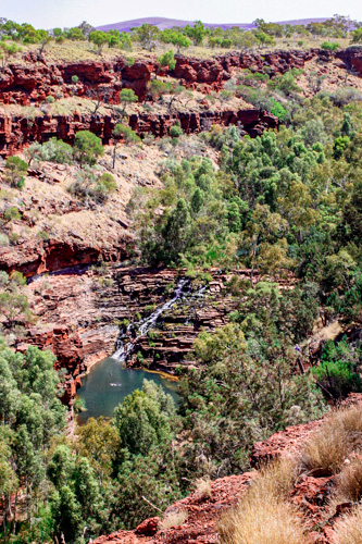 Fern pool in Karijini gorge, Dales gorge